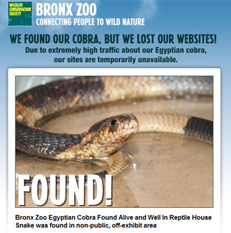 Bronx Zoo Cobra found