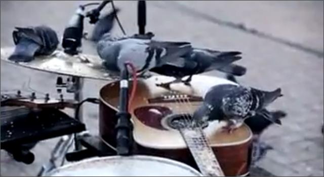 StandardBank Pigeon Jazz