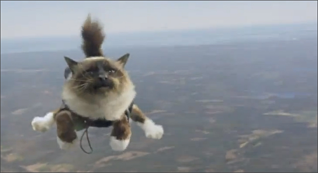 Folksam - Skydiving Cats