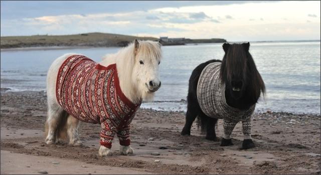 Visit Scotland Shetland Pony Sweaters