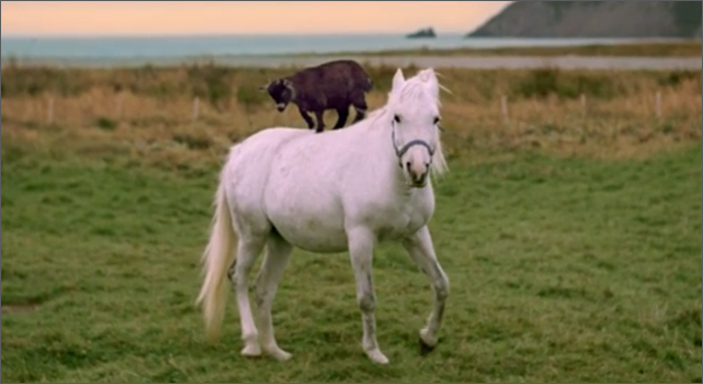 Newfoundland &amp; Labrador Tourism Ad - Goat Riding Horse